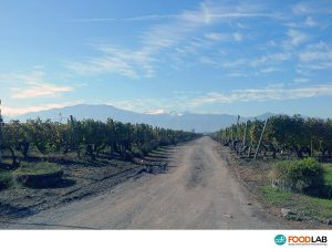 Chilean vineyards - CDR WineLab for wine analysis in Chile