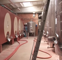 Understand and control malolactic fermentation in wine