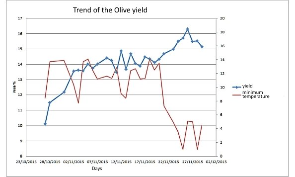graph on the trend of the 2015 Tuscan olive yield and temperatures of the oil season: a decrease in minimum temperatures increases the yield