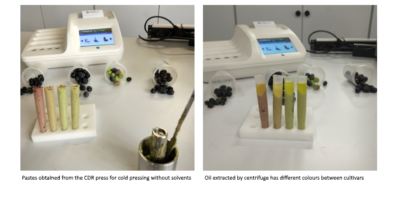 Pastes obtained from the CDR press for cold pressing without solvents have colours that are different from each other - Oil extracted by centrifuge has different colours between cultivars
