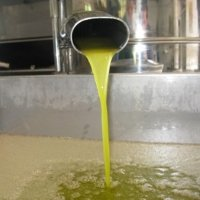 Extra virgin olive oil quality and the transformation process