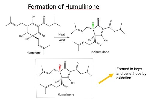 Chemistry in beer production process: Formation of Humulinone