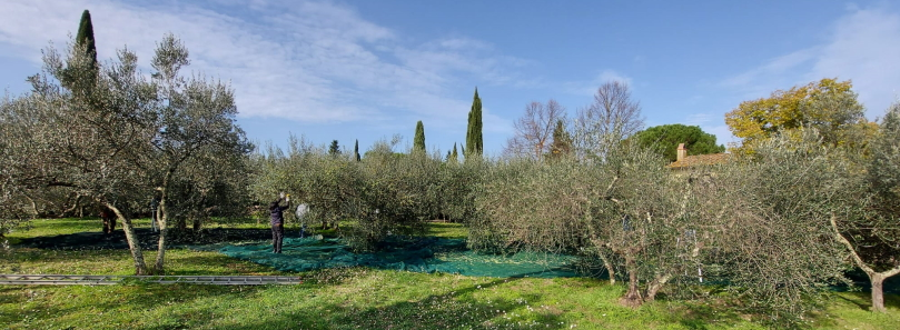 Study of the quality of Tuscan oil with CDR OxiTester for quick, simple and reliable analyses in the mill